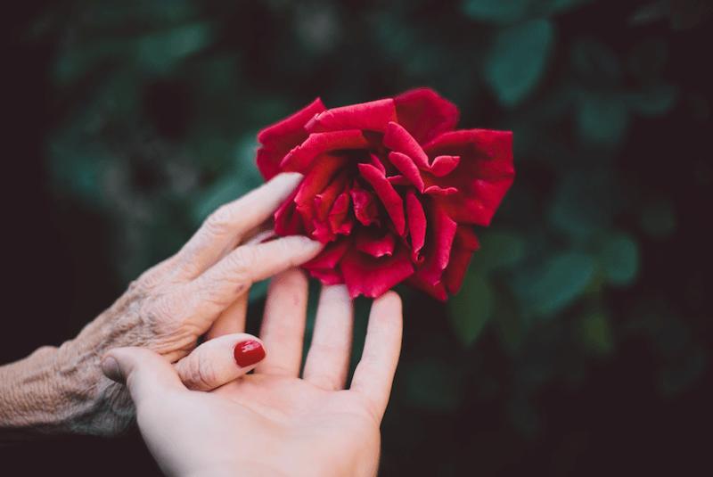 il fiore rosso per sciogliere l'invidia