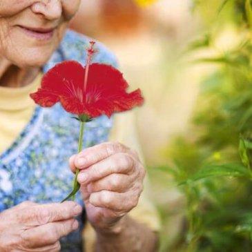 L'Integrità Ancestrale del Fiore Rosso