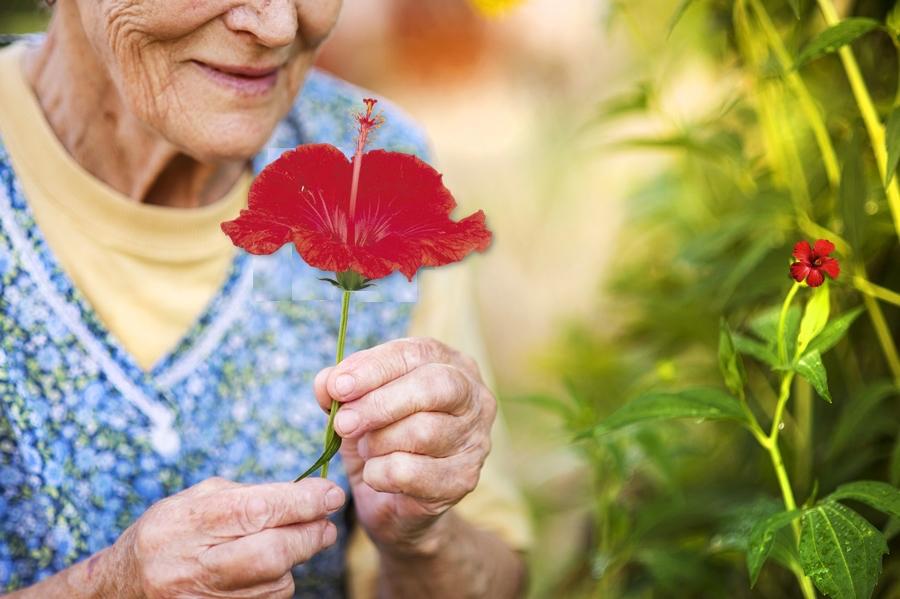 Integrità Ancestrale del Fiore Rosso