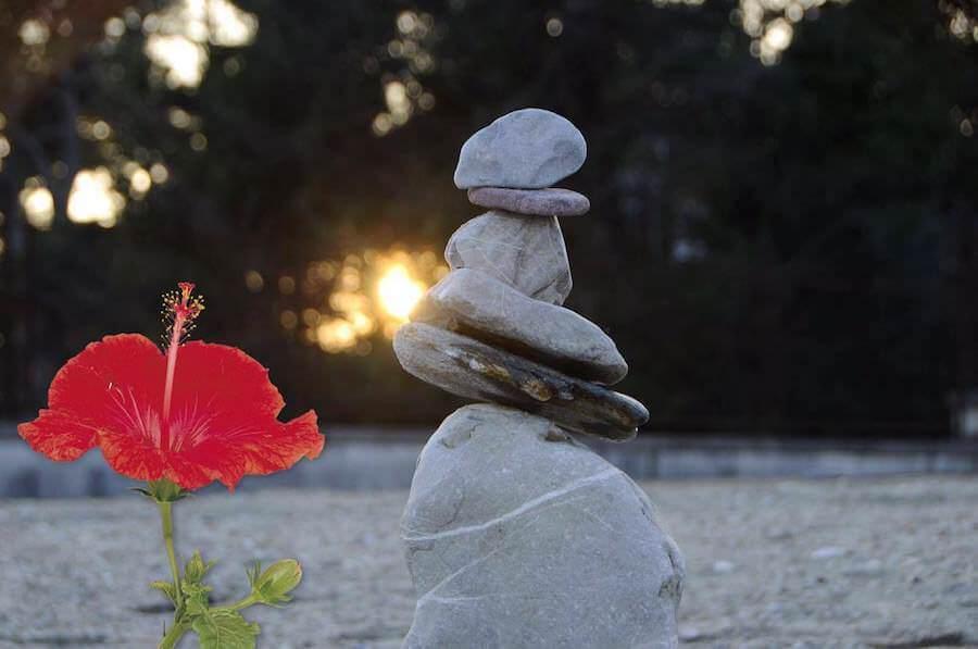 lo zen del fiore rosso